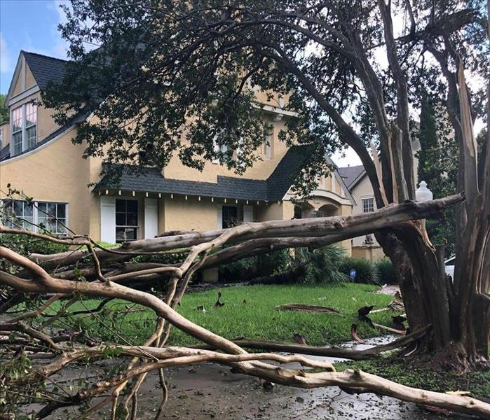 A downed tree caused by a microburst storm