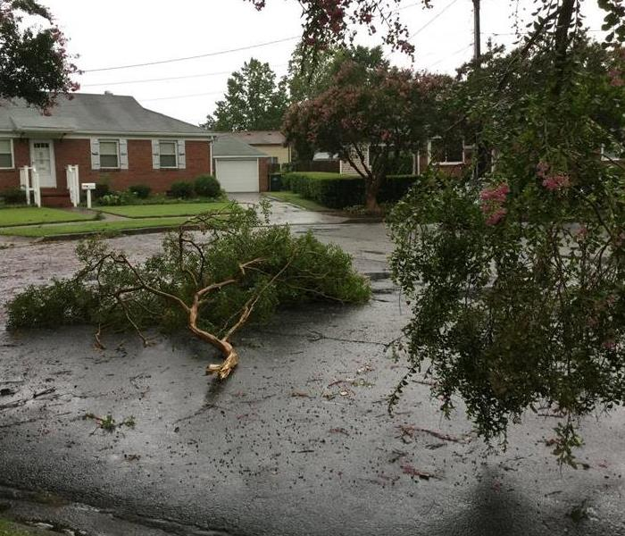 tree limbs on a road knocked down by a storm