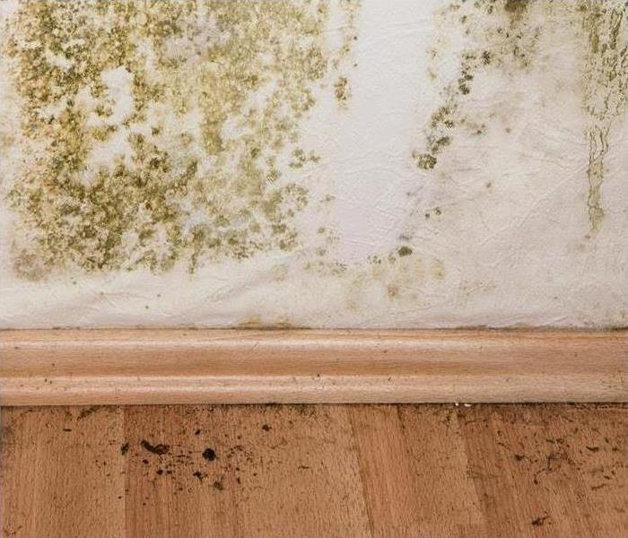 Mold Remediation How Mold Can Impact Your Health