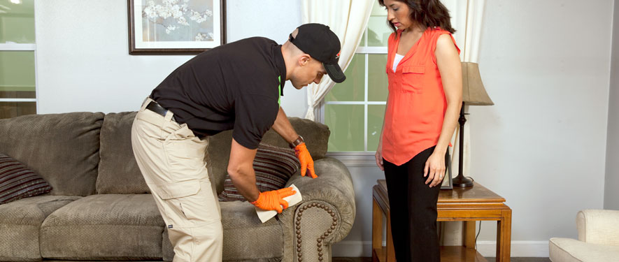 Lynnfield, MA carpet upholstery cleaning